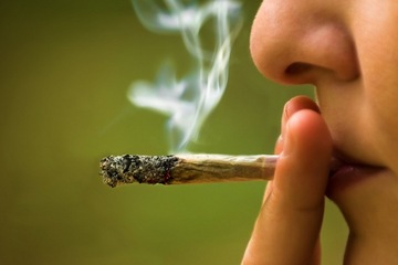 Marijuana Use Linked to Two Deaths